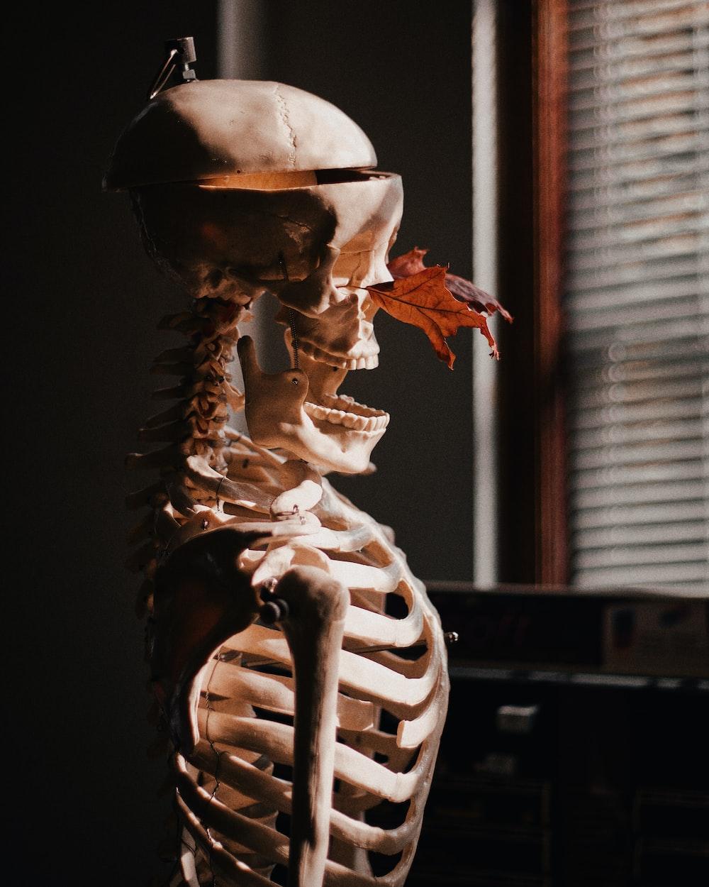 brown skeleton beside window