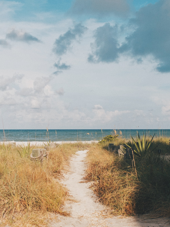 grasses on shore during daytime