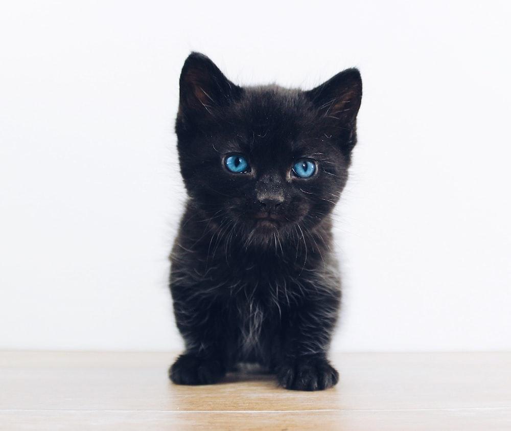 black kitten photo – Free Cat Image on Unsplash