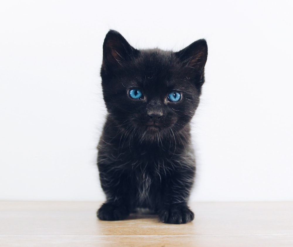 Black Kitten Photo Free Cat Image On Unsplash