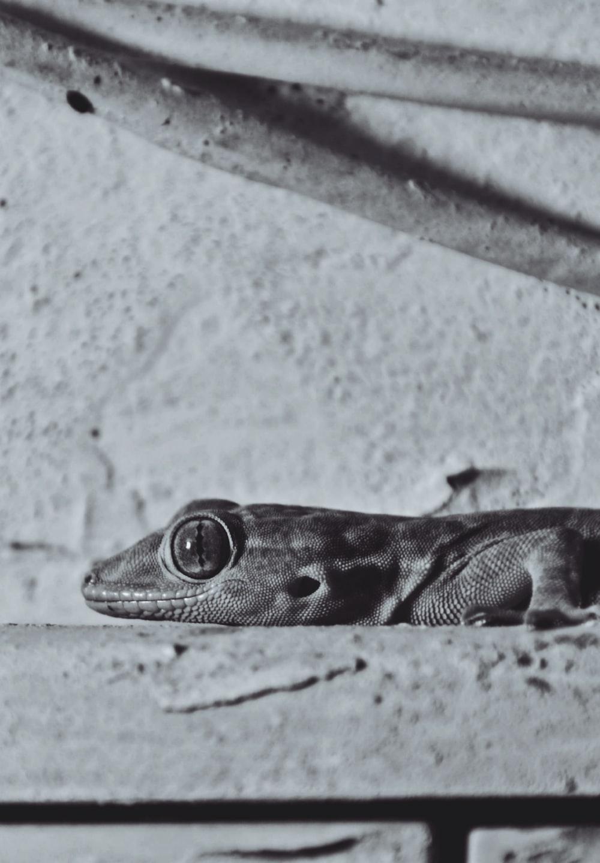 brown reptile