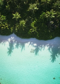 aerial photography of sea beside trees