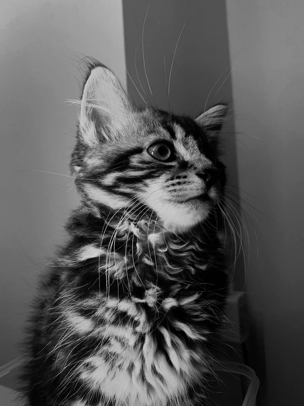 gray-scale photo of cat