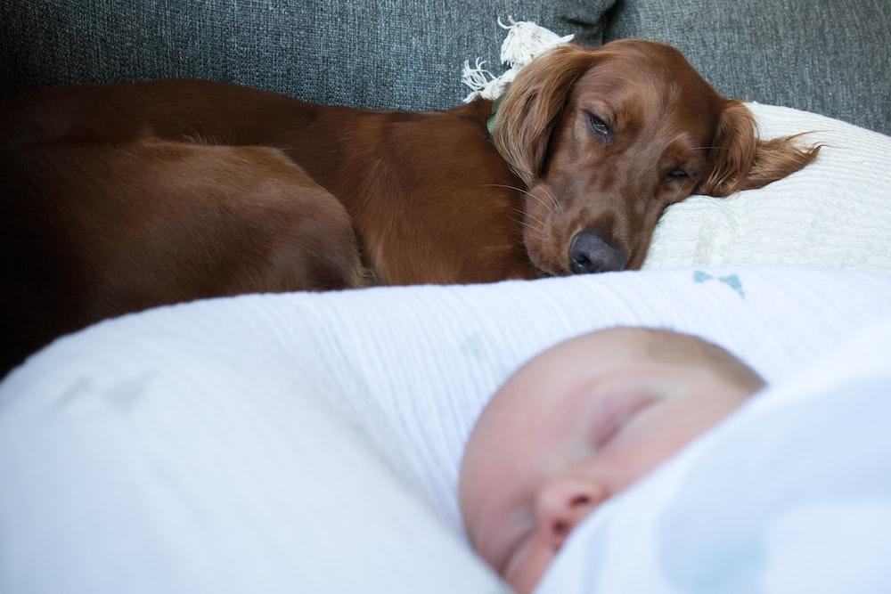 baby lying beside brown dog