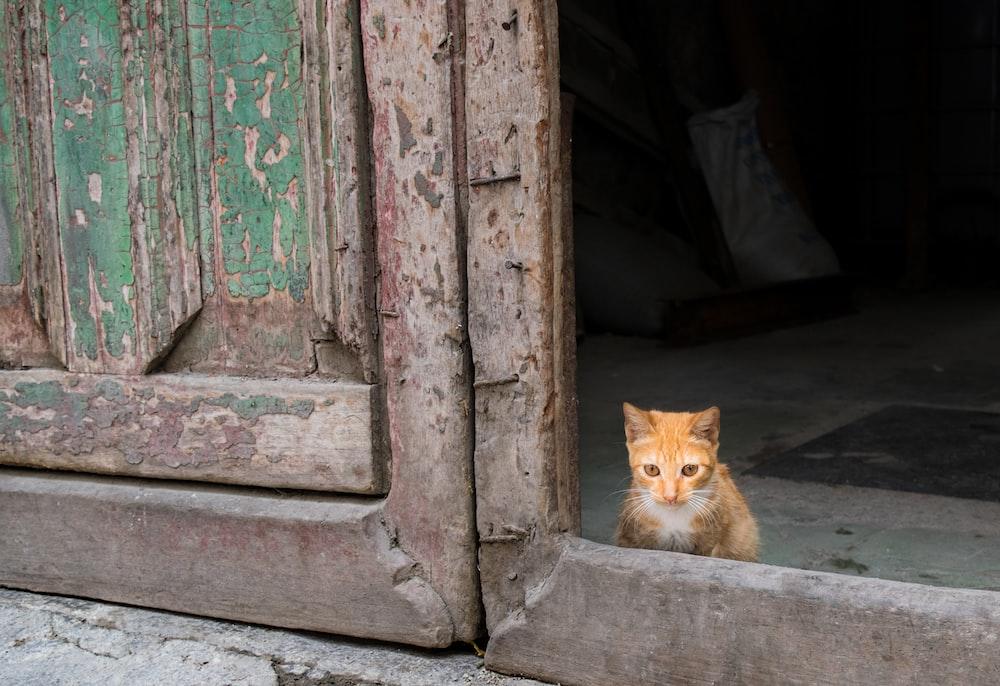 orange cat on window