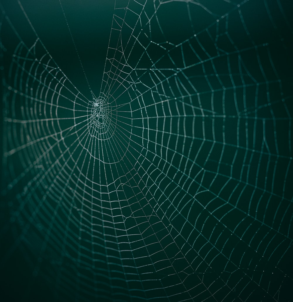 white spider web in macro photography