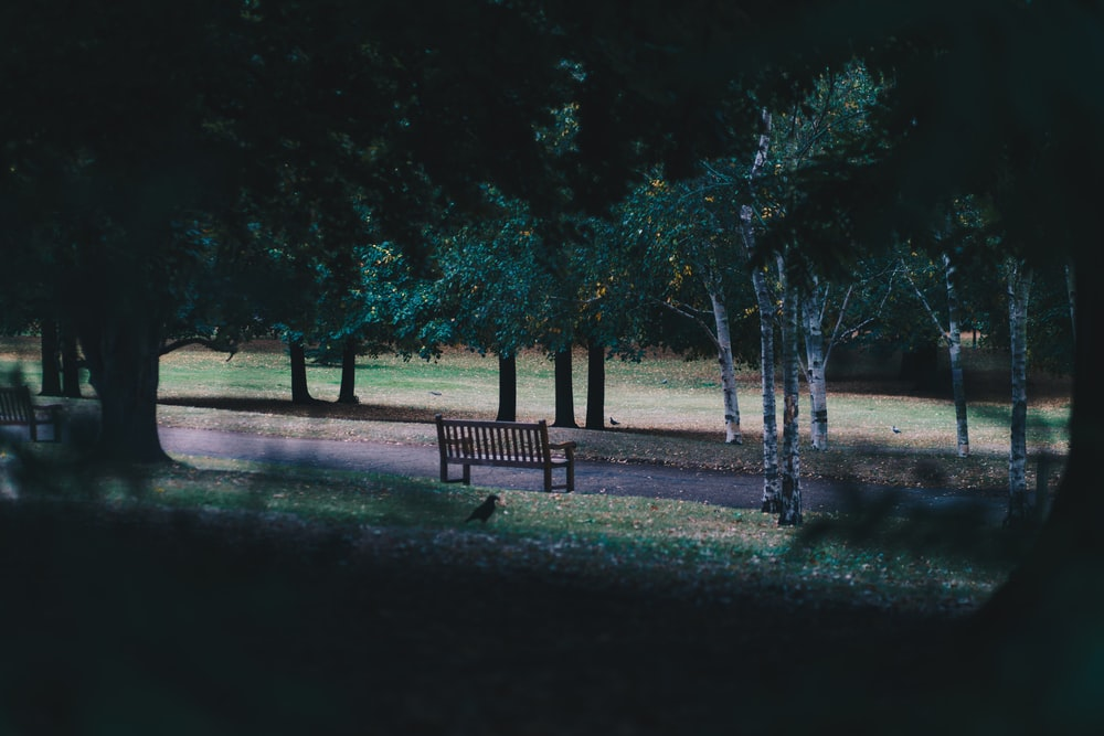 empty brown wooden bench