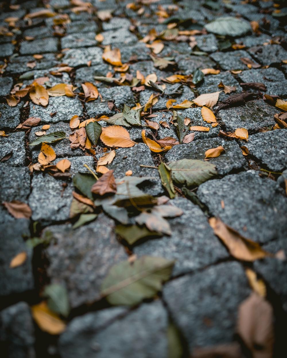 brown leaf photograph