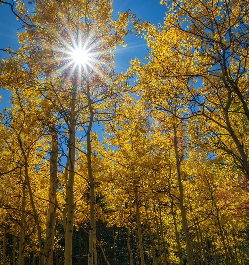 yellow and green trees scenery