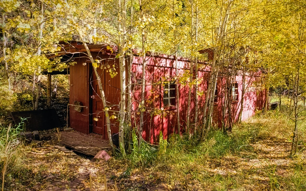 intermodal housing unit in forest