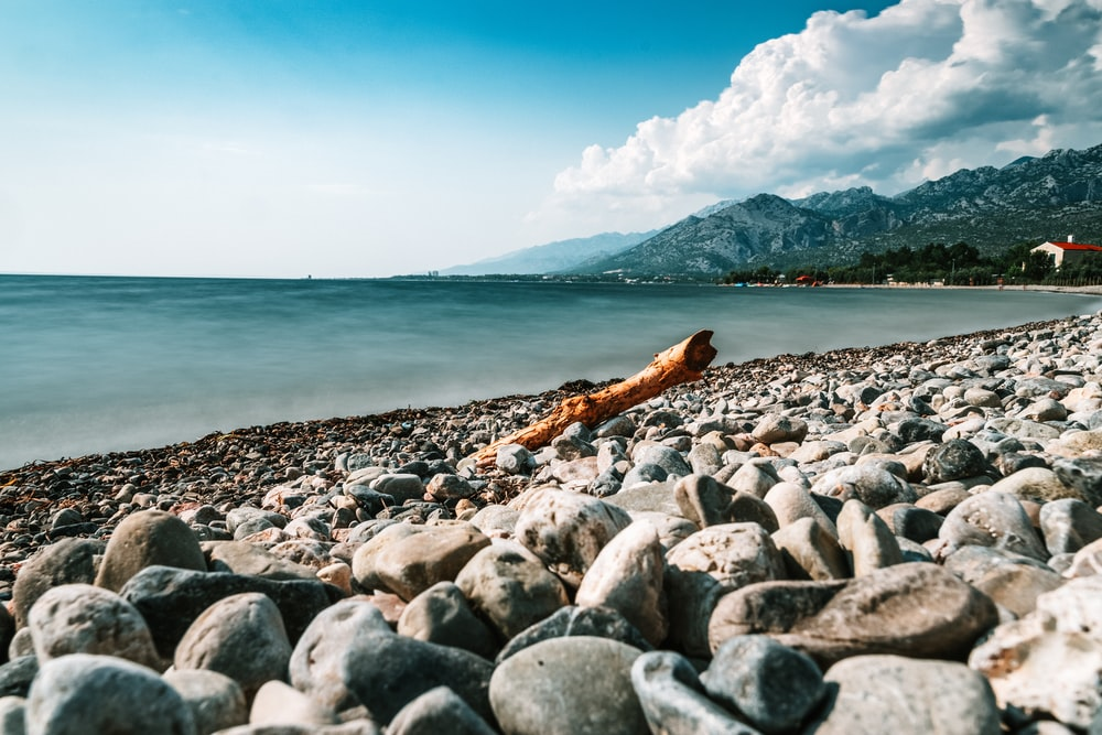 tree branch on pebble seashore