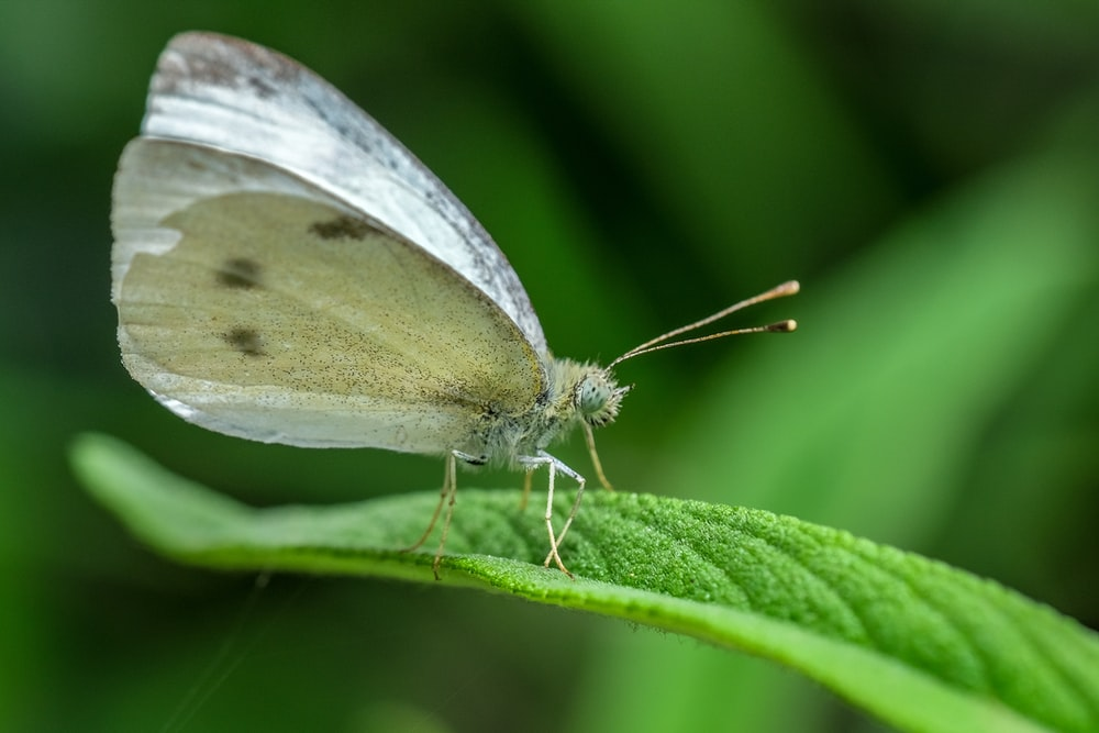 gray and white butterfly macro photography