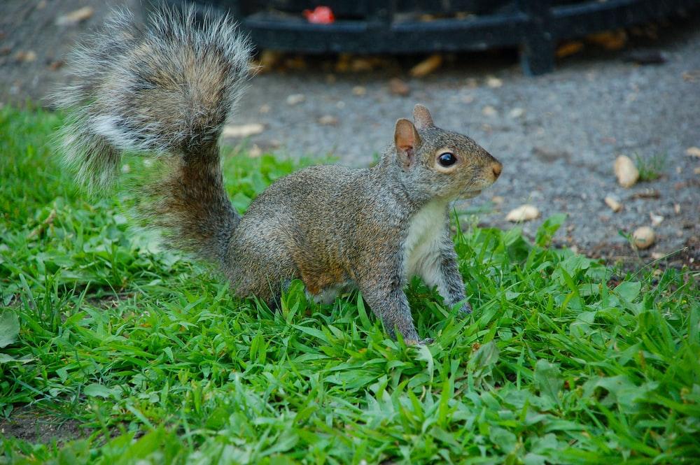 gray animal on grass