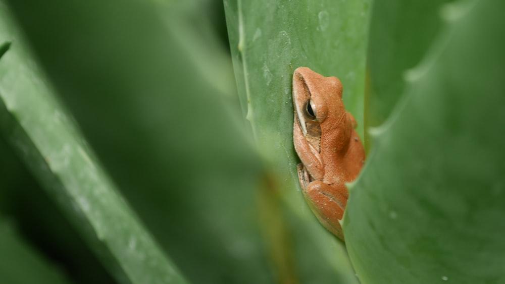 brown frog on leaf