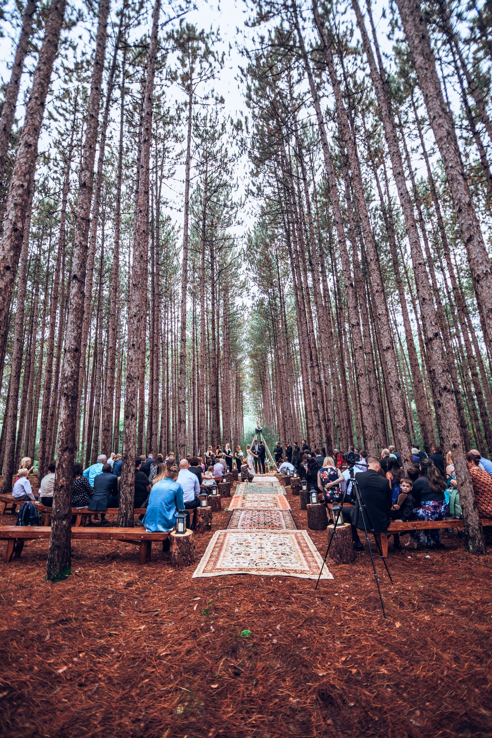 people sitting on forest