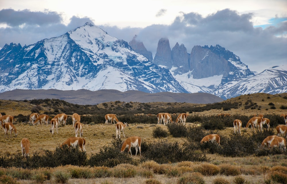 herd of horses on bushes and grasses across mountain
