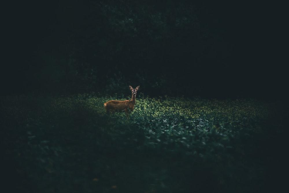 brown deer on green field