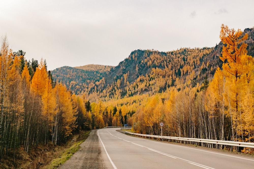 empty pavement during autumn season