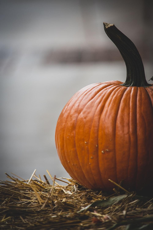 pumpkin on hay