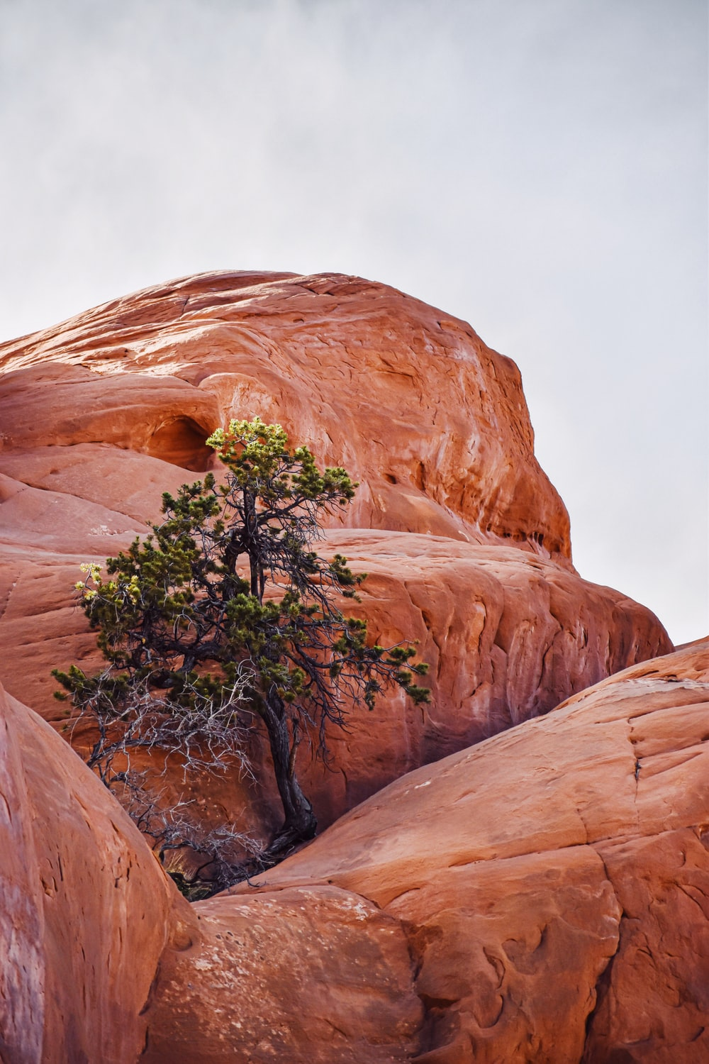 green trees in brown rock formation during daytime