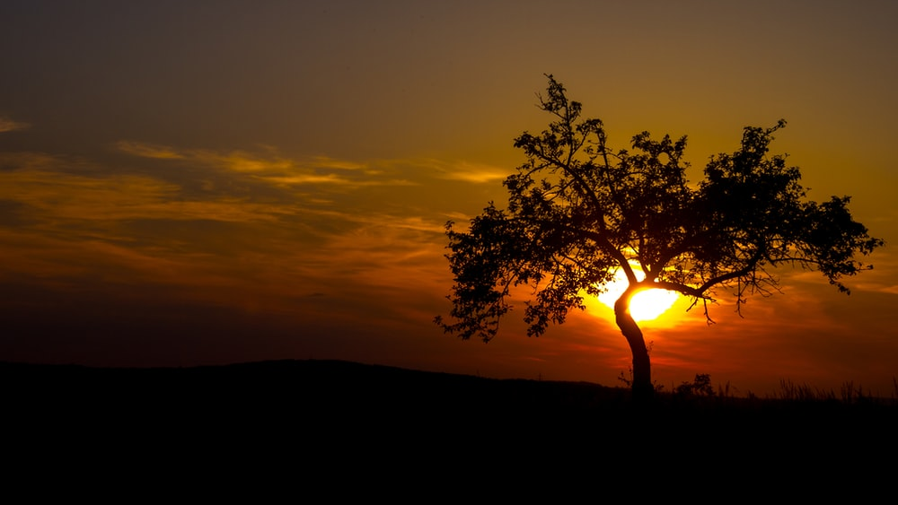 silhouette photography of tree during golden hour