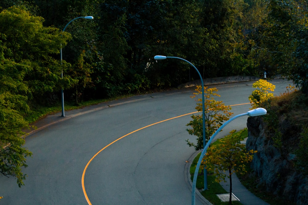 road with lampposts and trees during day