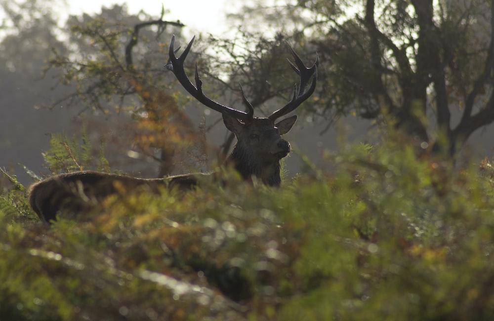 brown deer during daytime