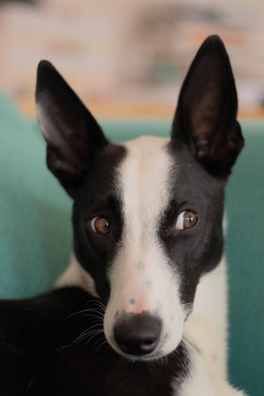 500 Funny Dog Pictures Download Free Images On Unsplash