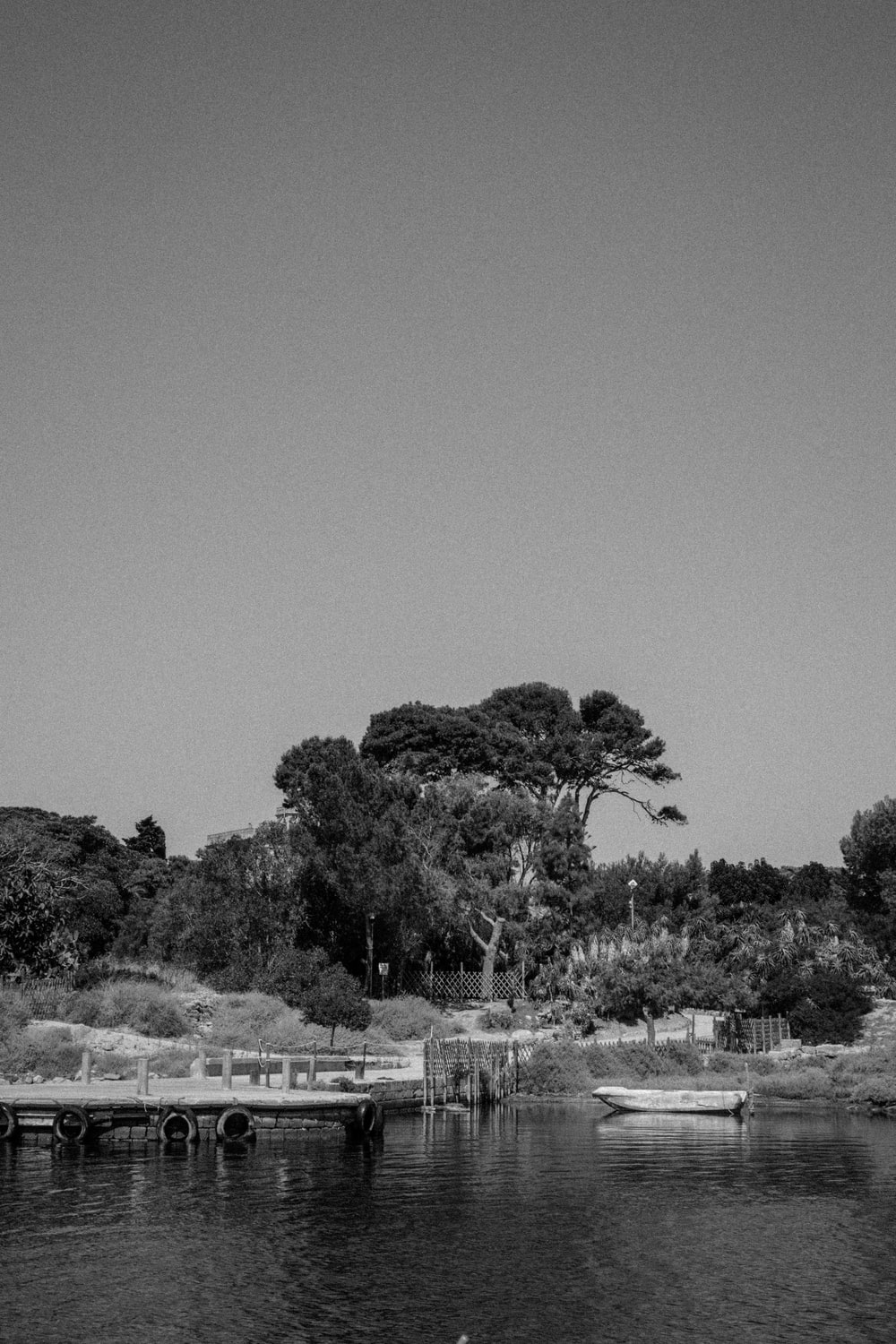 grayscale photography of trees near body of ater