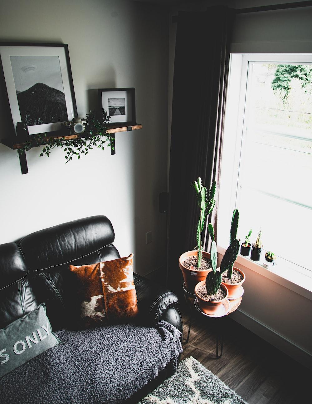 brown throw pillow on black sofa beside green cactus plants