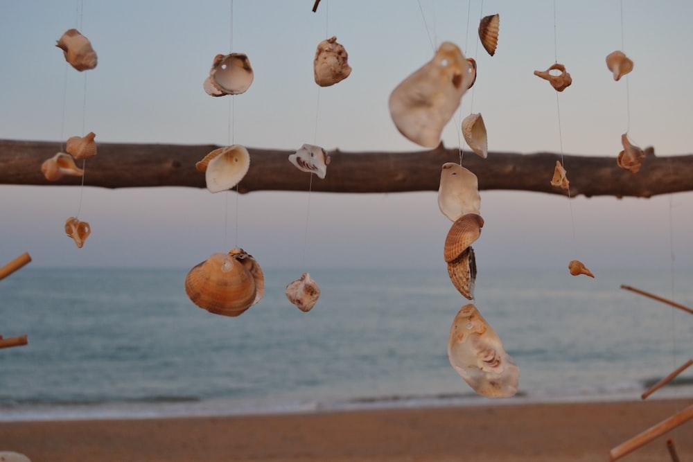 brown seashell hanging decor near body of water