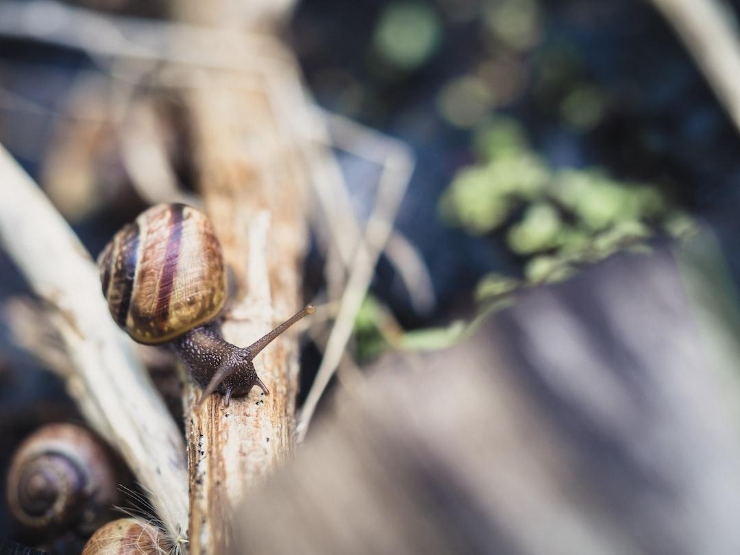snail running