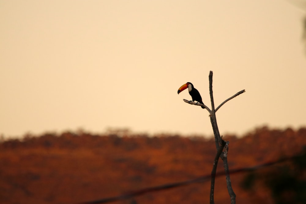 selective focus photography of black bird on twig