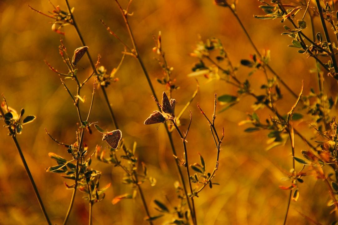 Butterflies on wild grass