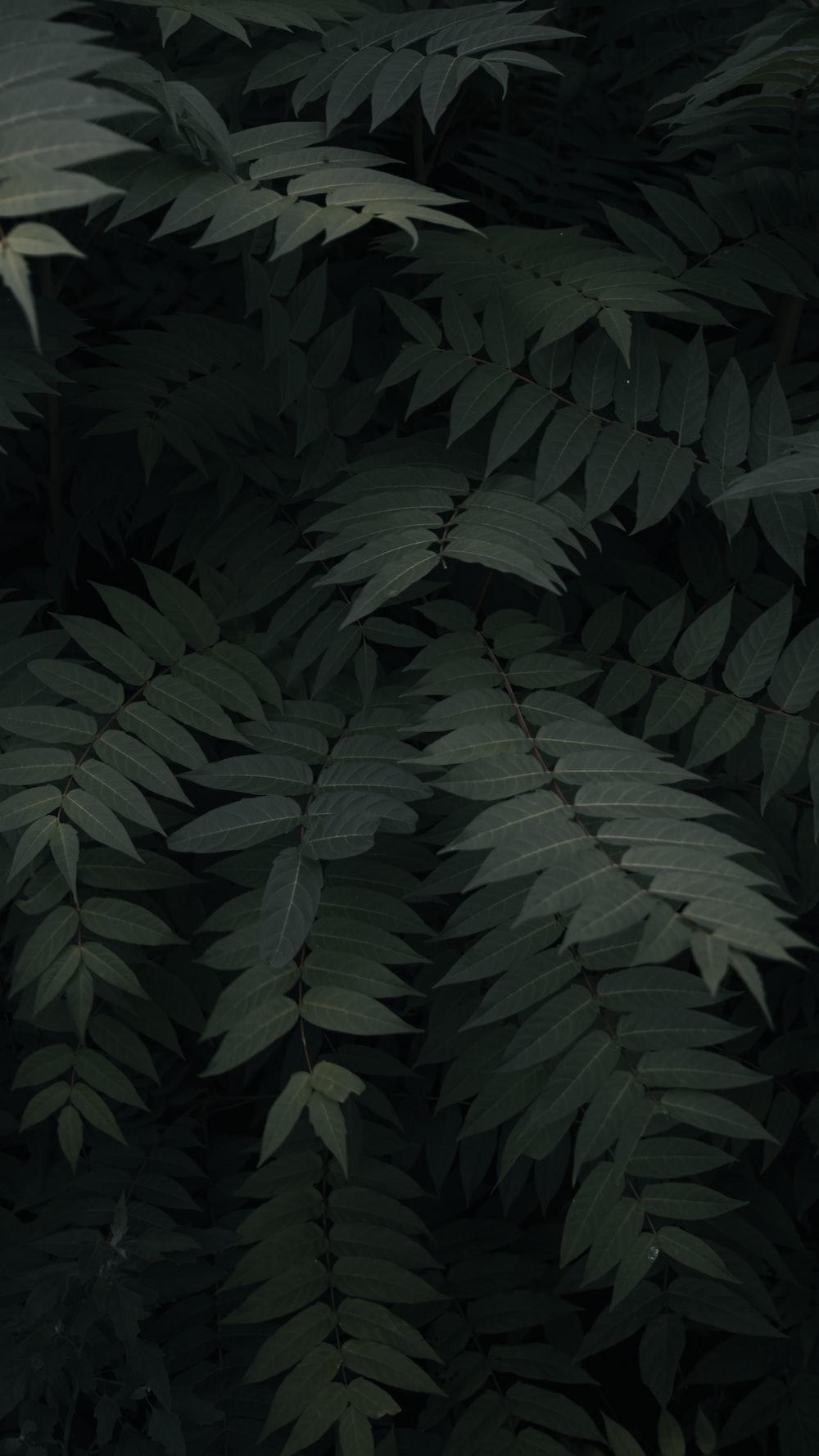 green leefed plants
