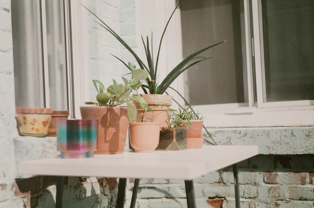 plant pots on white table