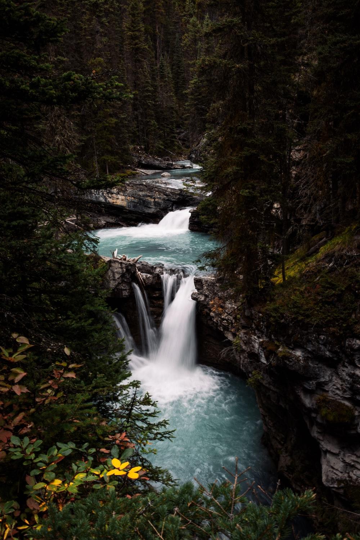 trees beside waterfalls