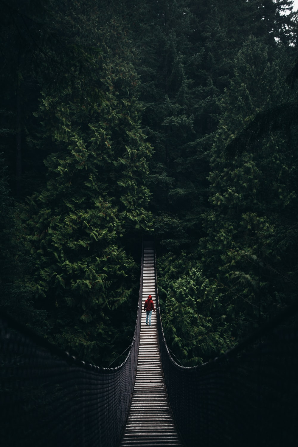 woman walking on hanging bridge surrounded by trees