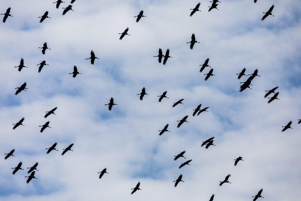 flying flock of birds during daytime