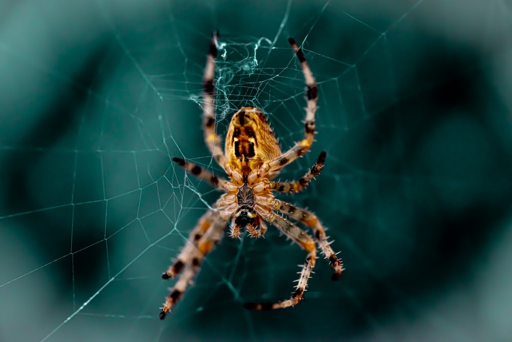 close up photography of spider on web
