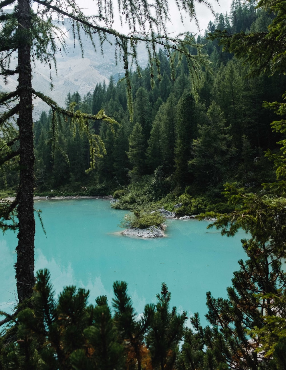green trees and body of water