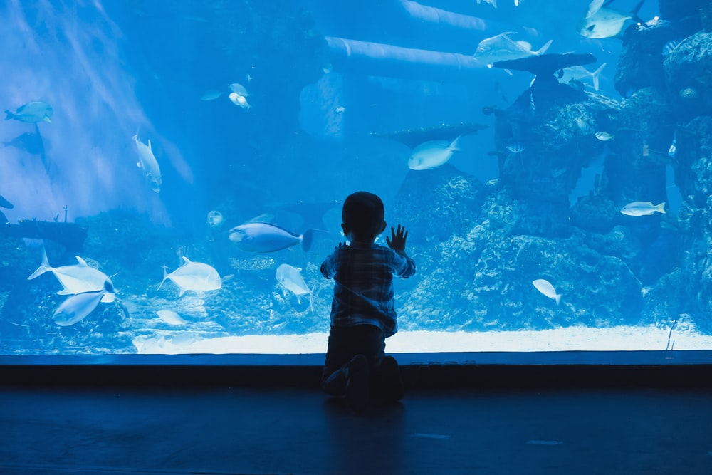 boy leaning forward on glass wall fish