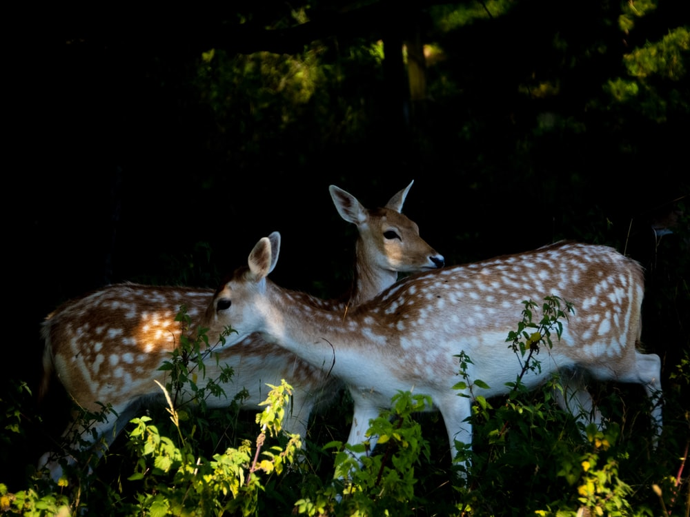 two deer at the forest