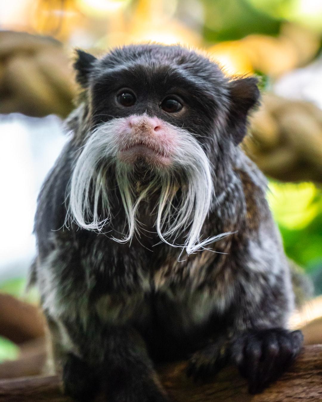 Monkey at Berlin Zoo