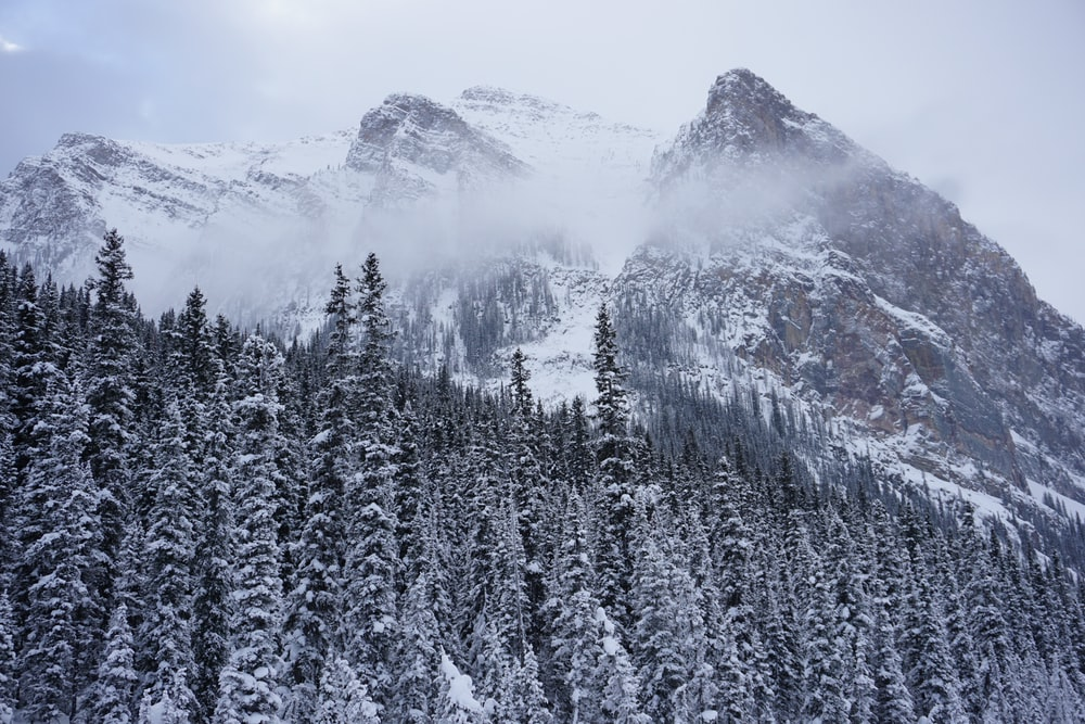 snow-covered mountains and trees