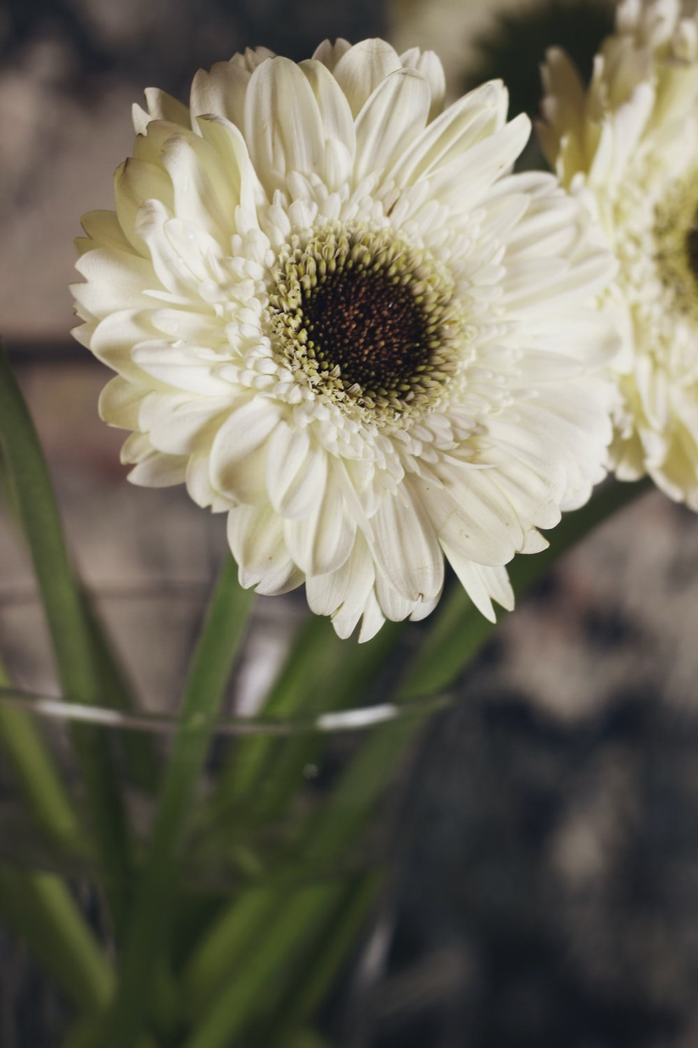 white petaled flower close-up photography