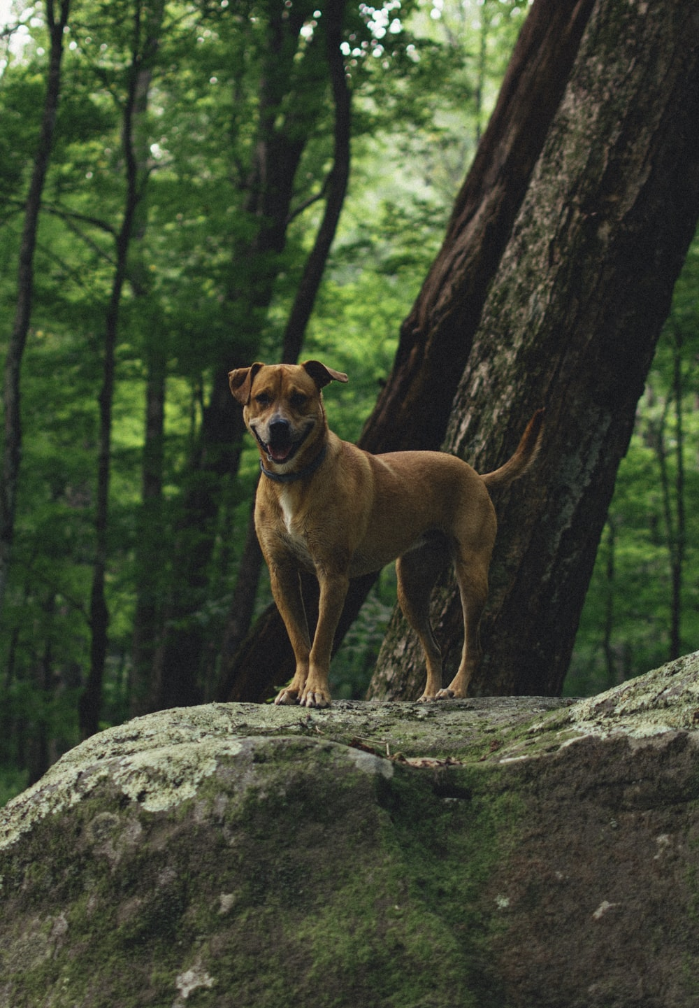 short-haired brown dog on rock