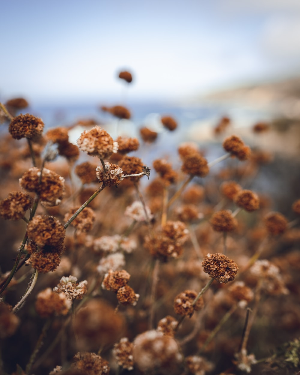 brown flowers during daytime