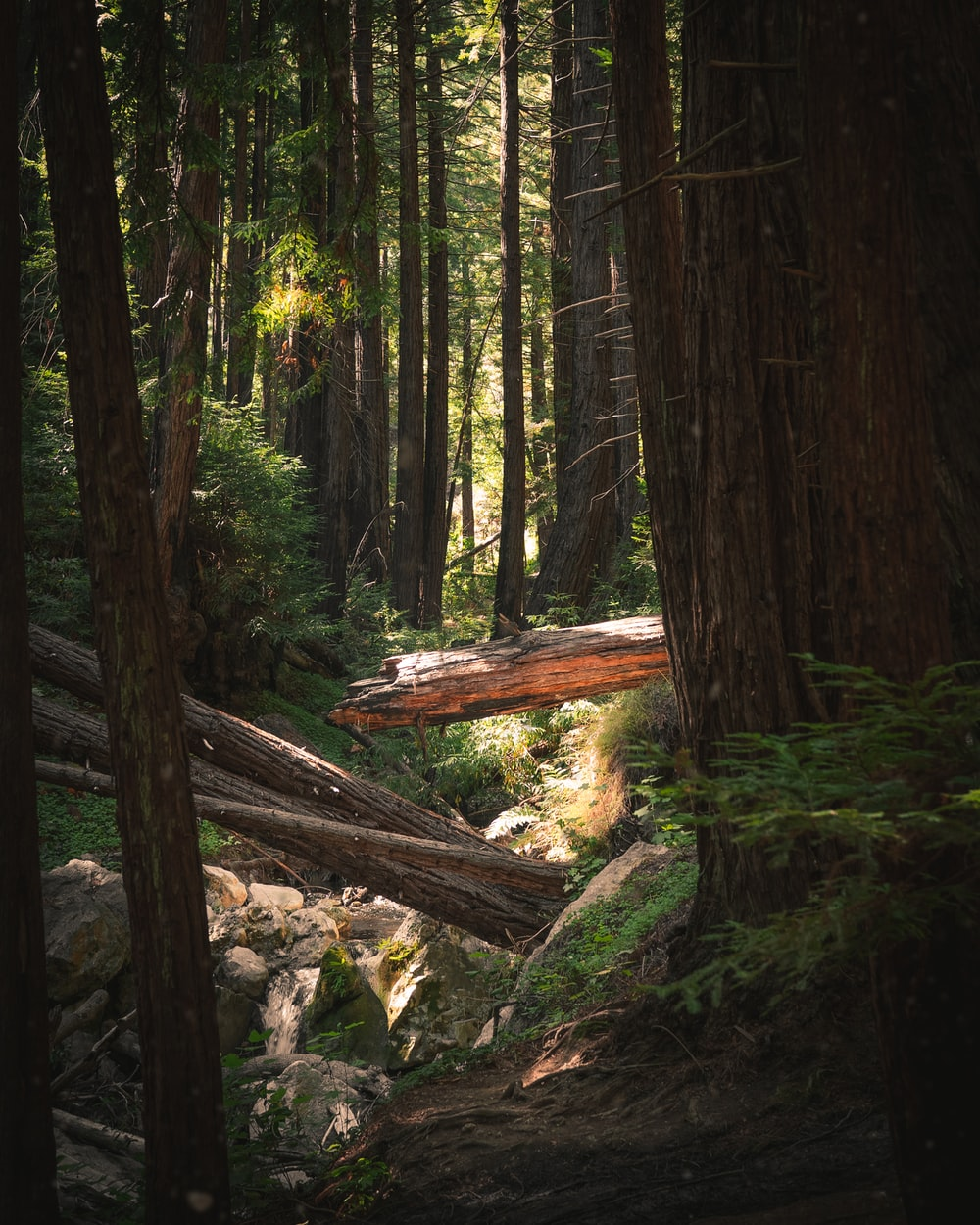 brown cut logs surrounded with tall and green trees during daytime