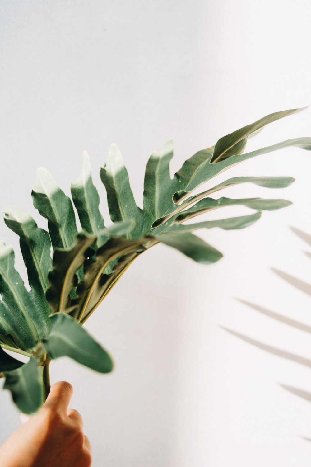 green-leafed plant ]